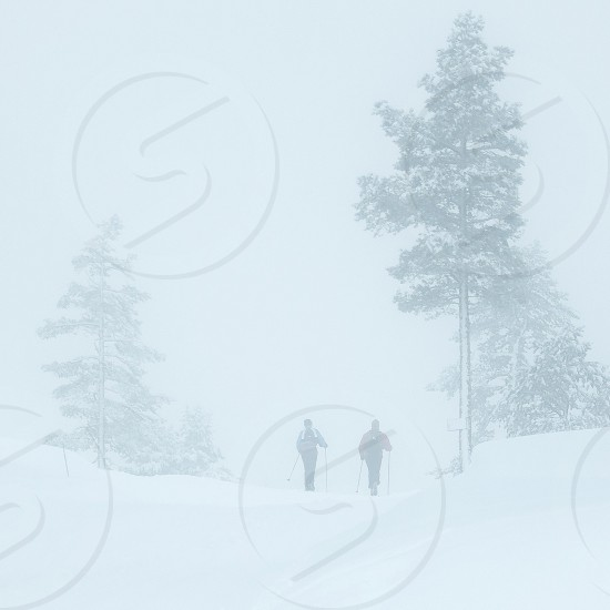 2 people near green trees filled with snow photo