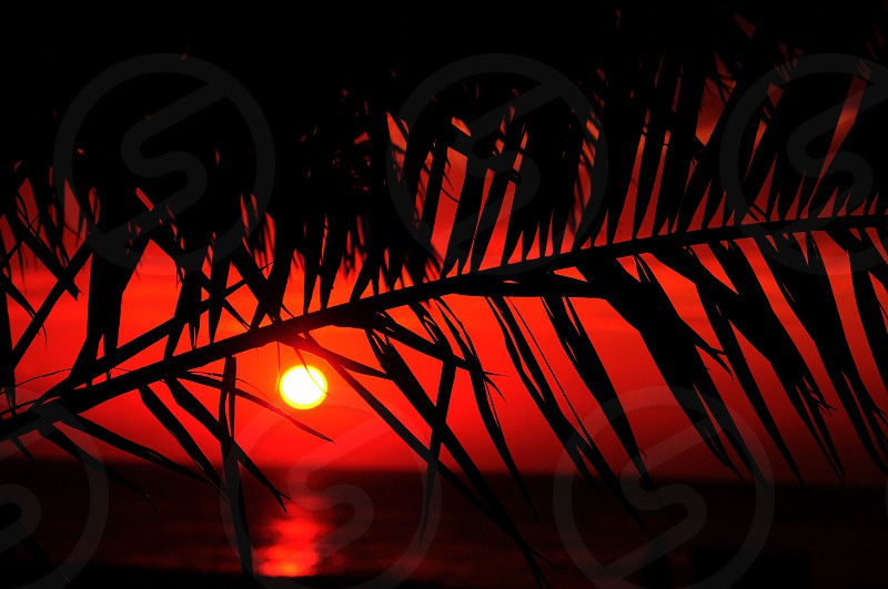 red sunset over water through palm trees photo