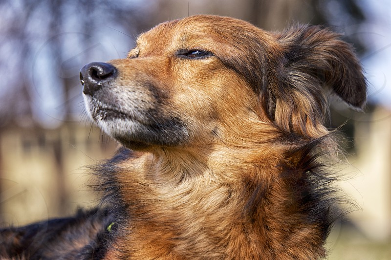 black and tan medium coat medium sized dog photo