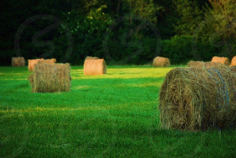 brown hay rolls on green field photo
