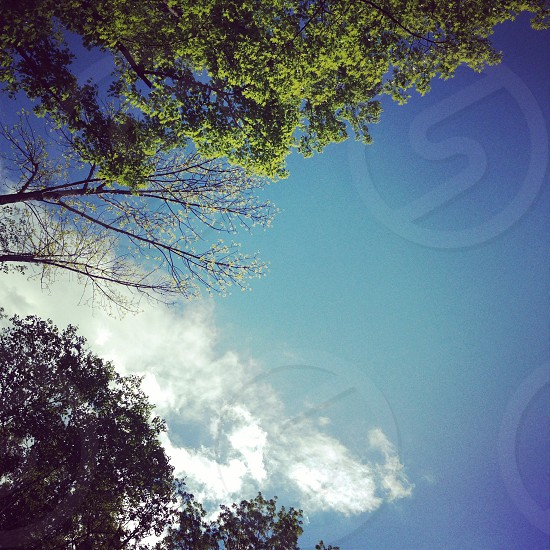 Nature outside trees blue skies clouds leaves landscape light green colors spring seasons  photo