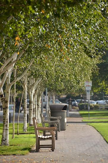 Park bench path trees sunshine photo