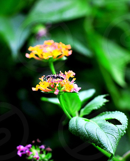 ant insect spring color green photo