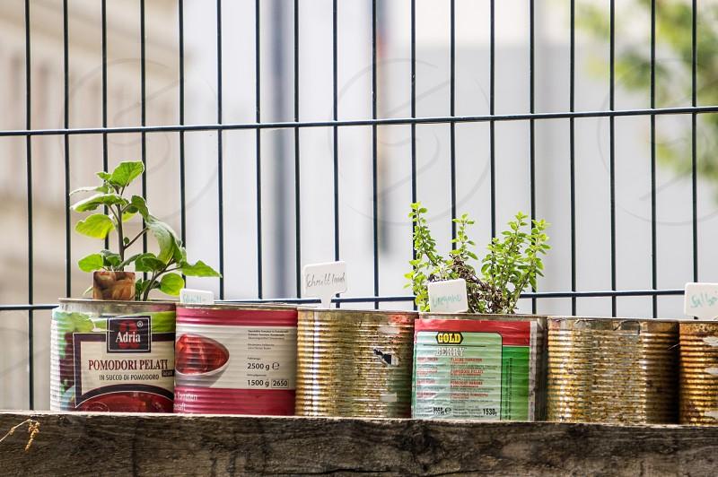 DIY:::plants photo