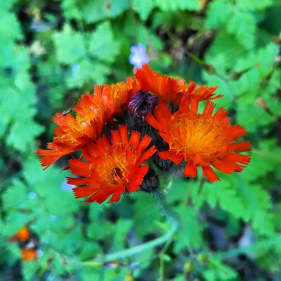 flower orange green garden photo