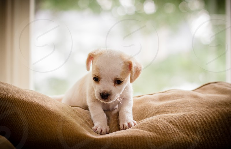 shallow focus photography of short-coated white and brown puppy photo