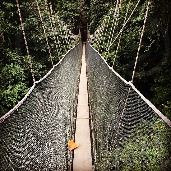 hanging bridge view photo