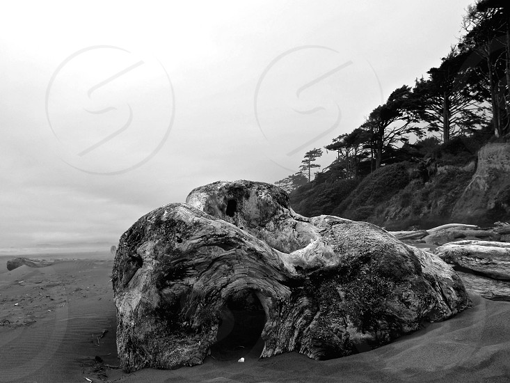 Driftwood Washington coastline beach landscape explore photo