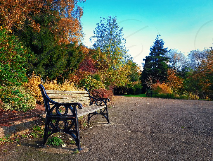 Wooden bench in Leicester Abbey Park in a sunny autumn day. Colorful trees and blue sky. photo
