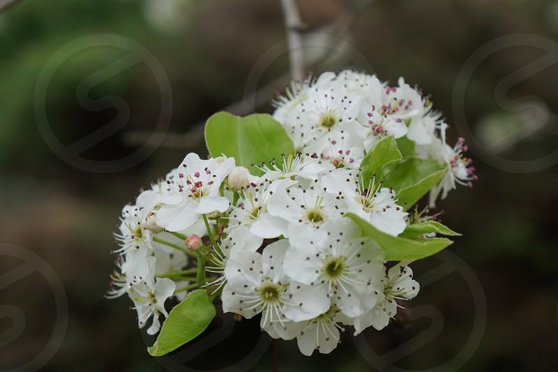 white flowers with green leaves in tilt shift lens photo