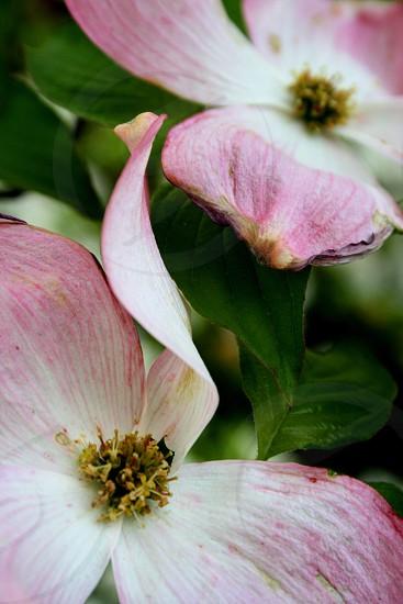 A crush flowers  photo