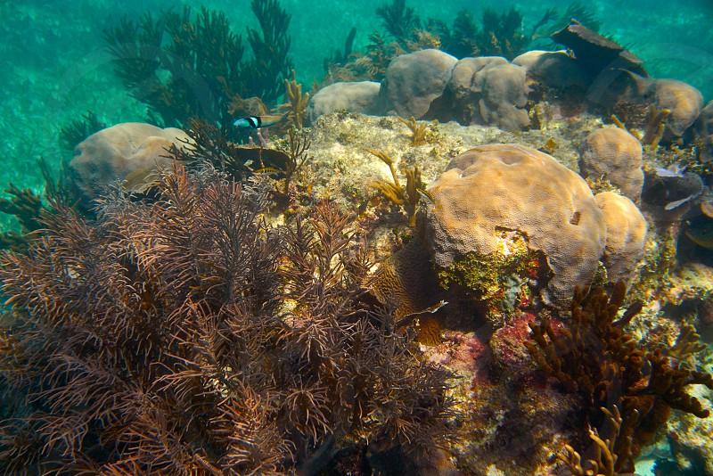 Mesoamerican barrier Great Mayan Reef in Riviera Maya of Caribbean Mexico photo