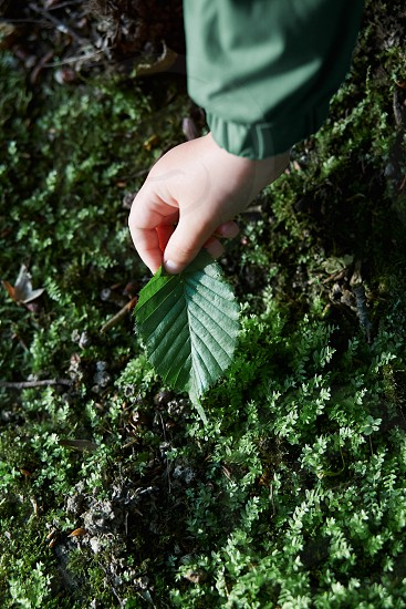 Child's hand holding a leaf during walk in forest. Candid people real moments authentic situations photo