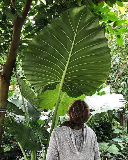 Girl and giant palm fan  photo