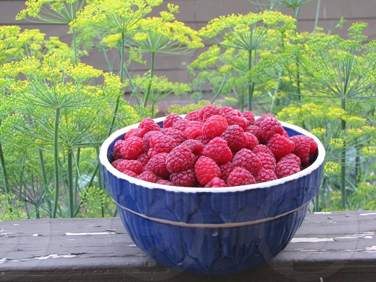 Bowl of raspberries photo