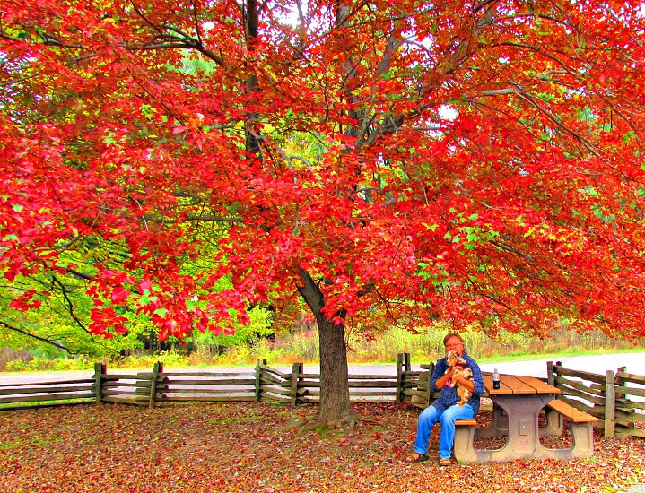 Man and dog sit on a picnic bench in the Autumn. photo