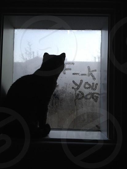 Cat envy photo
