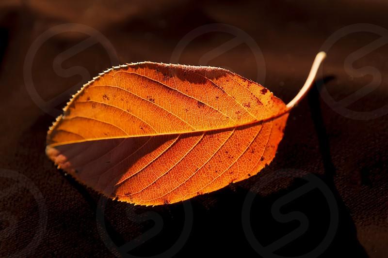 Chasing Light Leaf photo