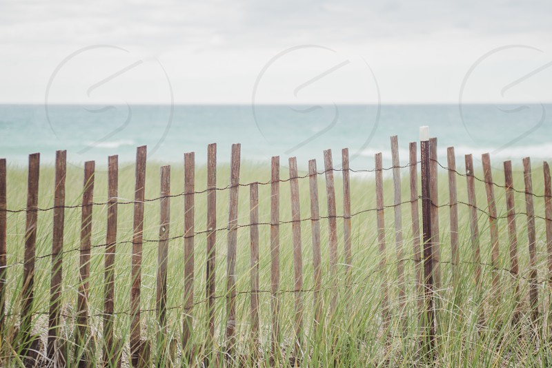 Dune grass and beach of Lake Michigan photo