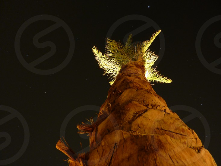 Palm tree against a starry sky in Egypt photo