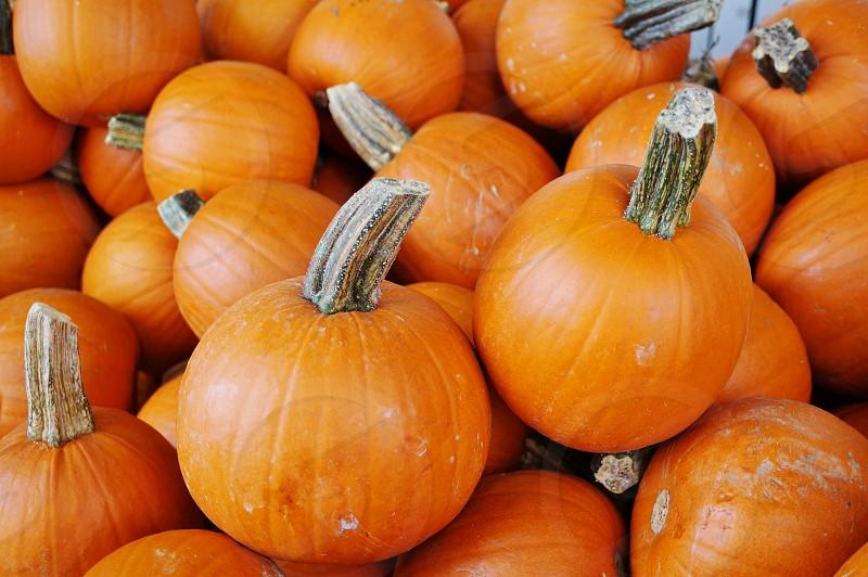 pumpkin orange round bulk farmers market autumn fall halloween thanksgiving squash small photo