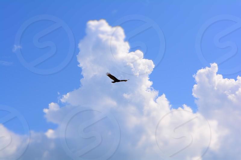 Falcon Ble Sky photo