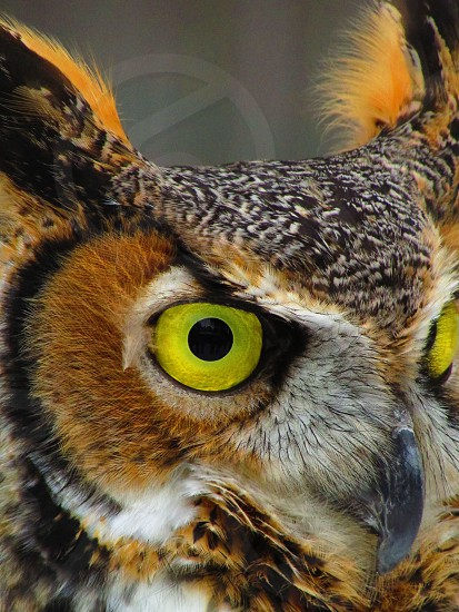 Owl Green Nature Beautiful Brown Natural Vibrant Color Bright Intense photo
