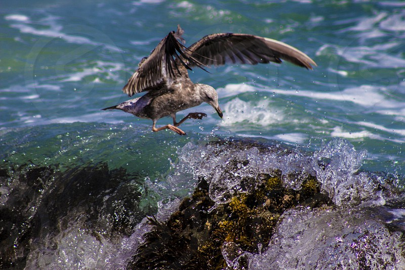Bird water animal nature ocean wave photo