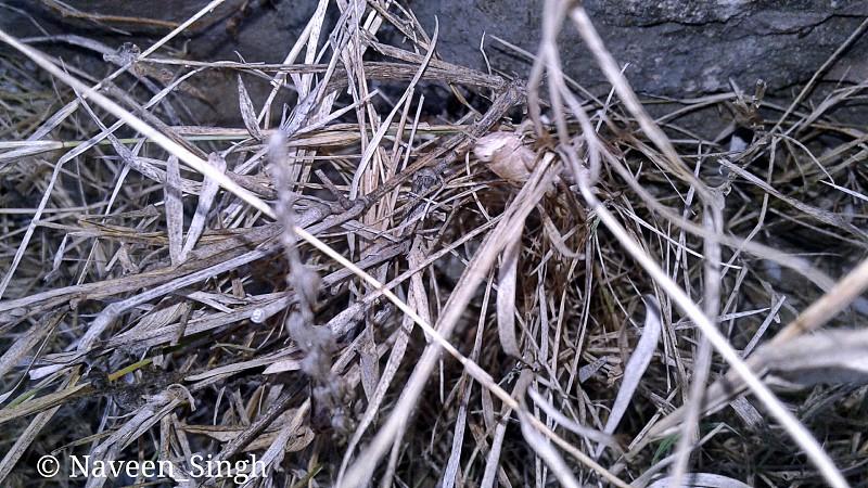 #Kota #India #Rajasthan #nature #wood #outdoors #dry #tree #flora #root #environment #pattern #old #closeup #season #texture #grass #broken #little #ground photo