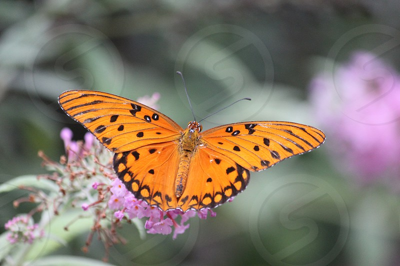 orange and black butterfly perching in purple flower selective focus photography photo