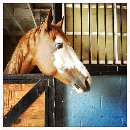 white and tan horse in black and brown wooden stable photo