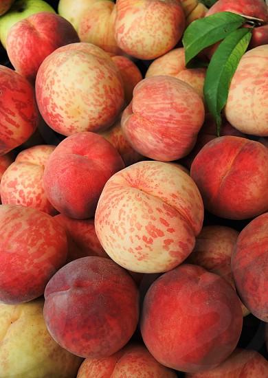 plum fruits photo