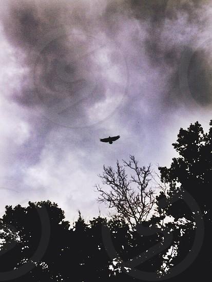 bird flying over tree photo
