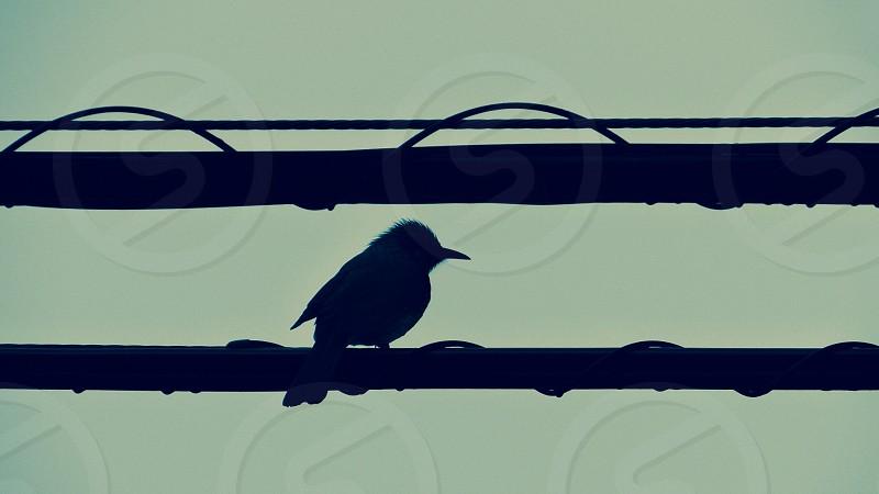 Bird sparrow photo