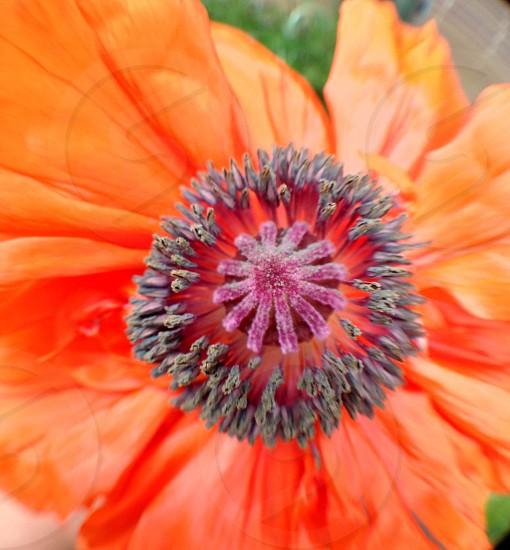 orange and gray flower photo