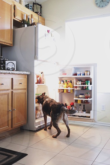dog leaning on 2 door refrigerator photo