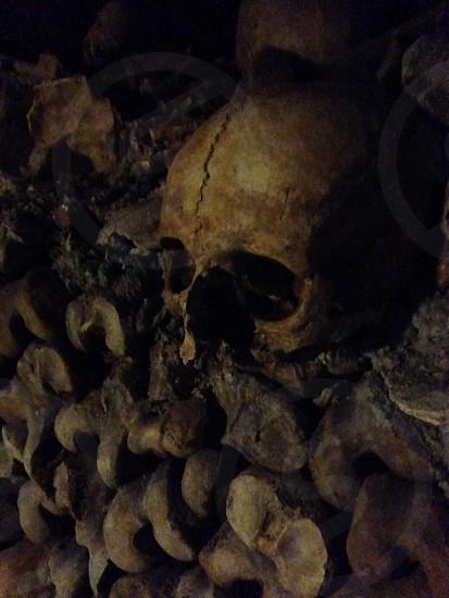 beige human skull photo