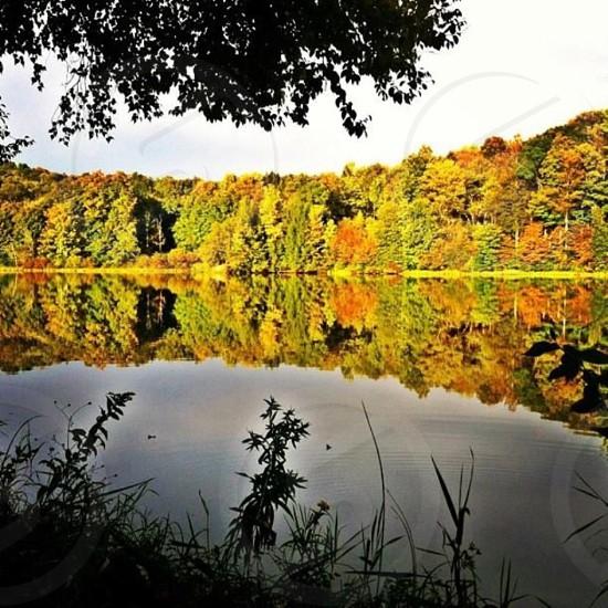 Fall reflections photo