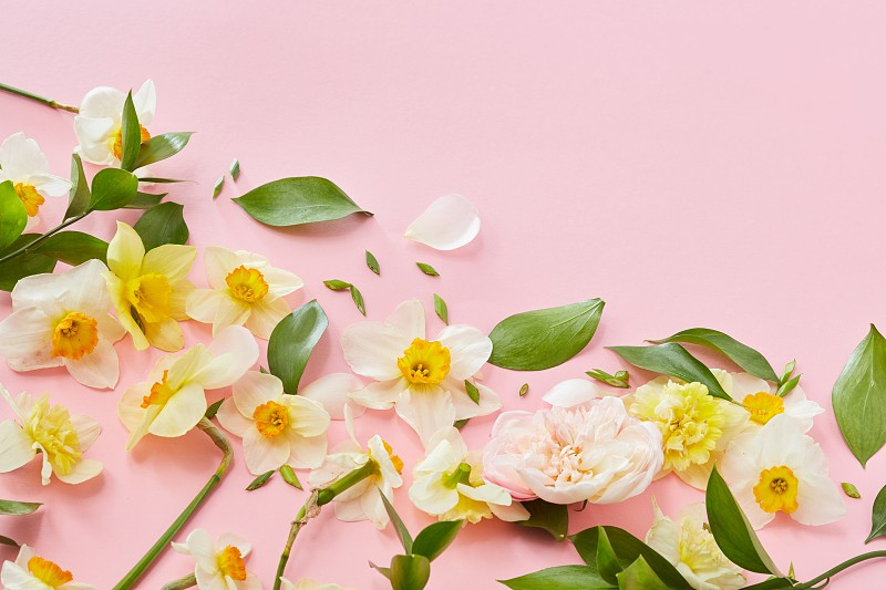 Composition with flowers and leaves in a border corner on a pink horizontal background with space for text flat lay photo