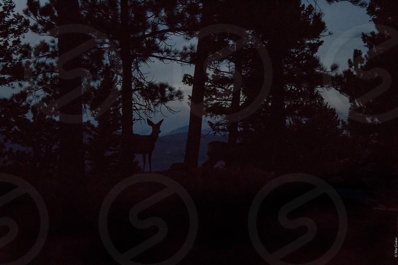 Deer nature wildlife trees woods hiking animals sunset dusk dark night photo
