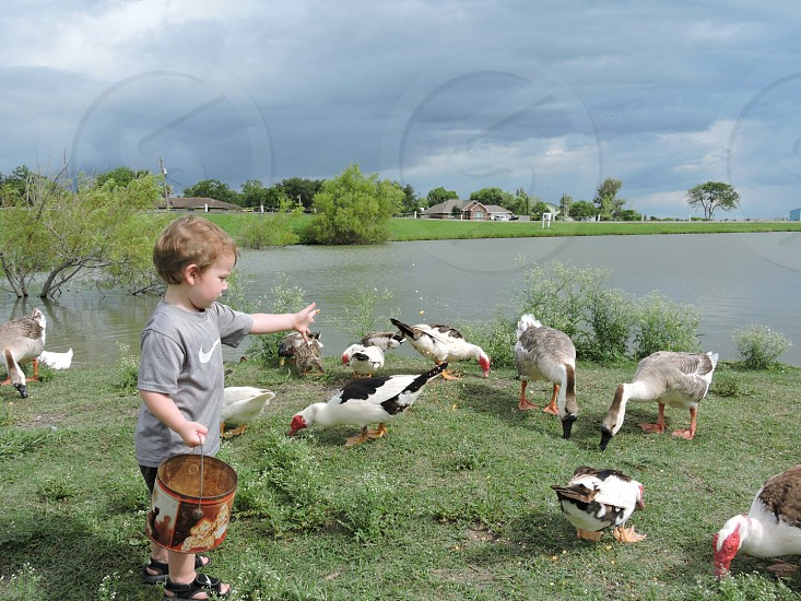 Feeding the ducks at the Park photo