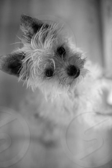 A curious dog indoors photo