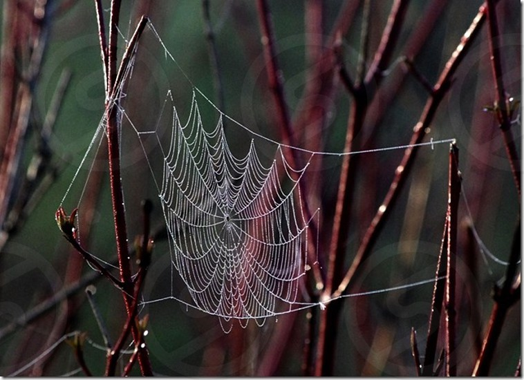 Drooping spider web in the morning dew photo
