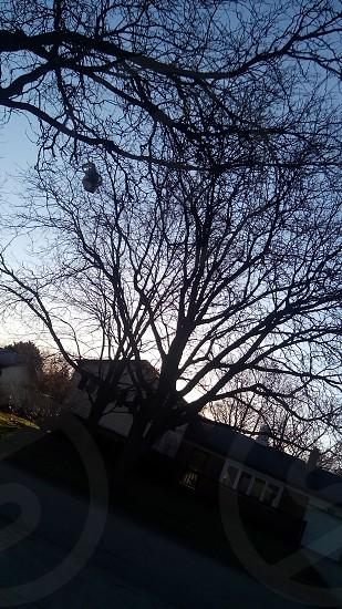 morningtime is so beautiful photo