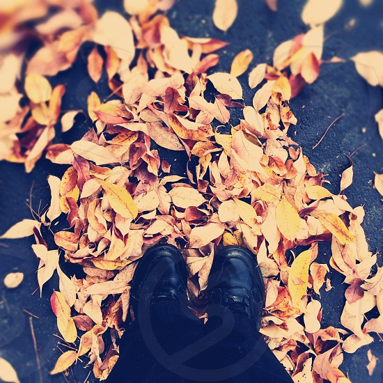 Golden October  photo