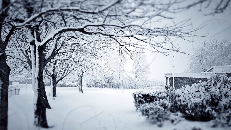 snow-covered bare deciduous trees and shrubs by lamppost and brick wall photo