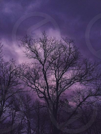 spooky; creepy; tree; halloween; boo photo