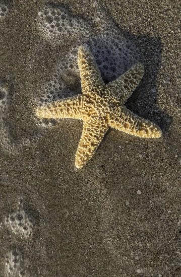 Starfish into the waves. Sunlight photo