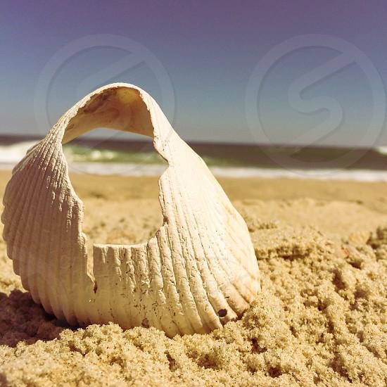 A day on the beach. photo