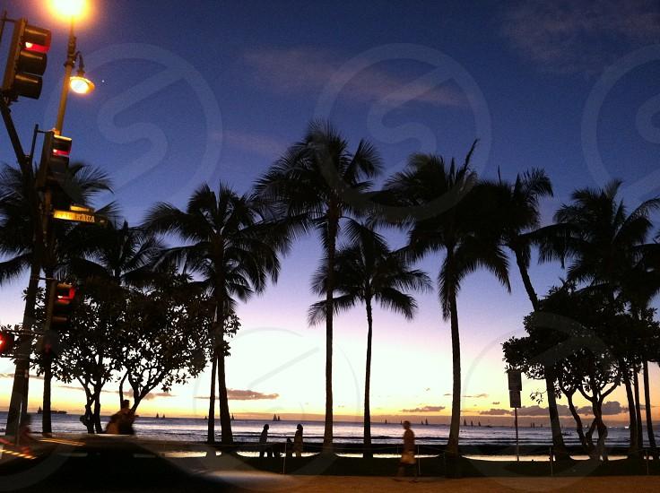 Oahu sunset street beach palm trees photo